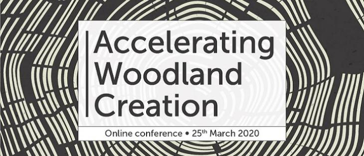 Accelerating tree planting & woodland creation in England