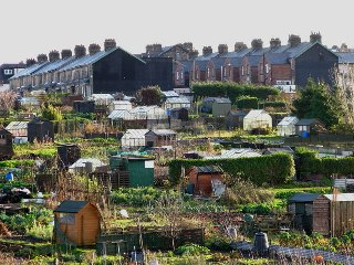 allotment gardens (credit David Rogers)